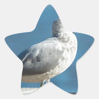 Call me M.Seagull Star Sticker
