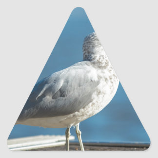 Call me M.Seagull Triangle Sticker