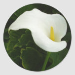 Calla Lily 8 Painterly Round Stickers