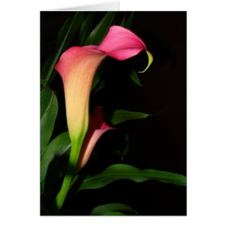 Calla Lily Flower Art Card