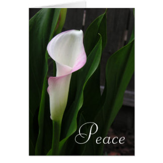 Calla Lily Note Cards