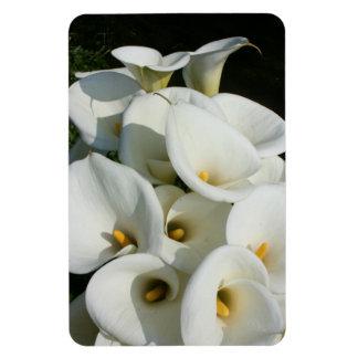 Calla Lily Plantation, Taiwan Rectangular Photo Magnet