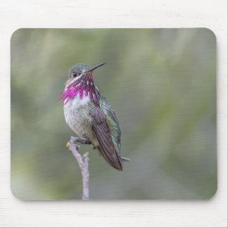 Calliope Hummingbird Mouse Pad