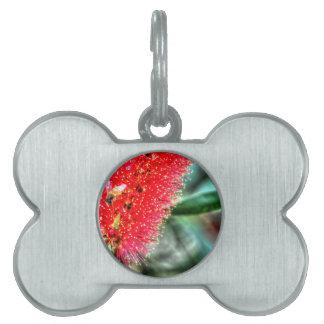 CALLISTEMON BOOTLE BRUSH FLOWER ART EFFECTS PET TAG