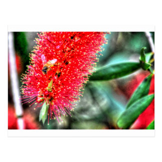 CALLISTEMON BOOTLE BRUSH FLOWER ART EFFECTS POSTCARD