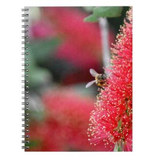 CALLISTEMON BOTTLE BRUSH FLOWER & BEE AUSTRALIA NOTEBOOKS