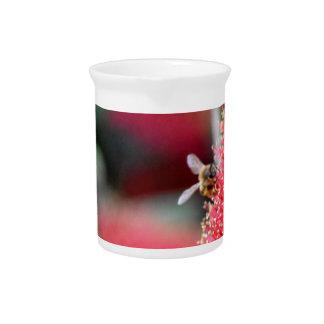CALLISTEMON BOTTLE BRUSH FLOWER & BEE AUSTRALIA PITCHER