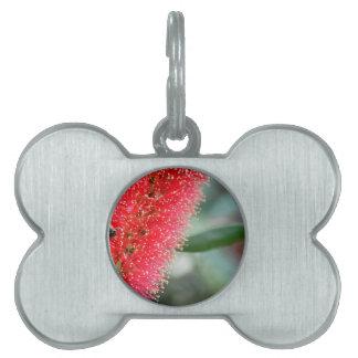 CALLISTEMON RED BOTTLE BRUSH FLOWER AUSTRALIA PET ID TAGS
