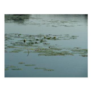 Calming Aquatic Postcard