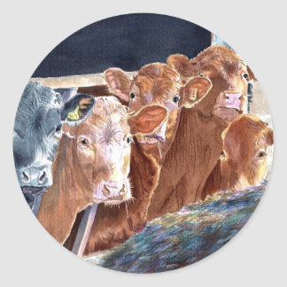 Calves at Brunch Round Stickers