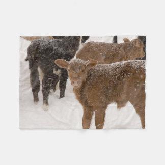 Calves in The Snow Fleece Blanket