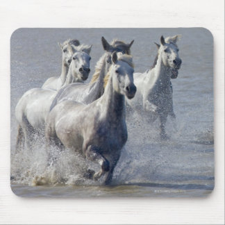 Camargue horses running on marshland to cross mouse pad