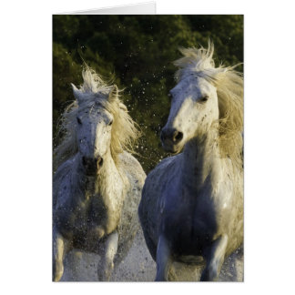 Camargue Spray Horse Greeting Card