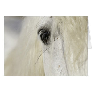 Camargue Stallion's Eye Horse Greeting Card