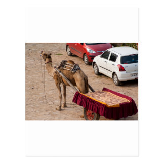 Camel and car postcard