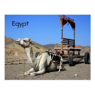 Camel and Cart - Egypt Postcard