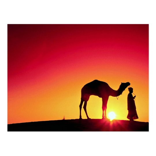 Camel and driver at sunset, India Postcard