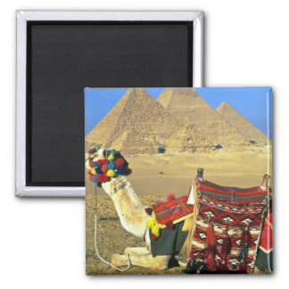 Camel and pyramids, Cairo, Egypt Square Magnet