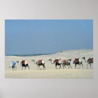 Camel caravan crossing the Sahara Poster