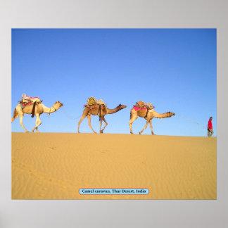 Camel caravan, Thar Desert, India Poster