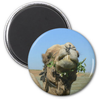 Camel chewing flowers 2 inch round magnet
