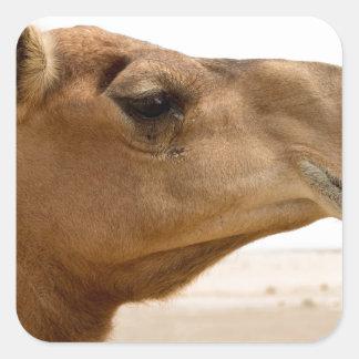 Camel face square sticker