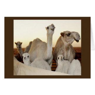 Camel Family Card