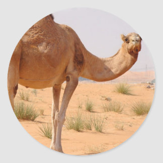 Camel for Arabs Stickers