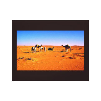 Camel Friends Canvas Print