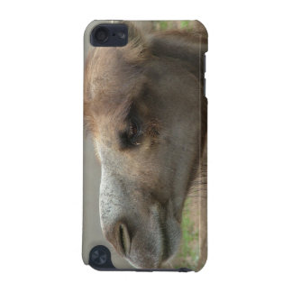 Camel Head iTouch Case iPod Touch 5G Cases