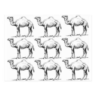 Camel herd art postcard