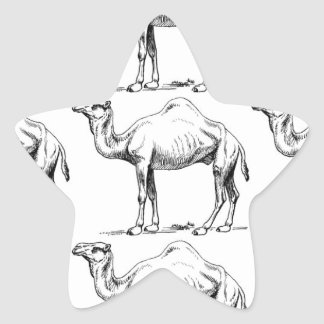 Camel herd art star sticker