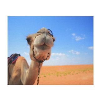 camel kiss canvas