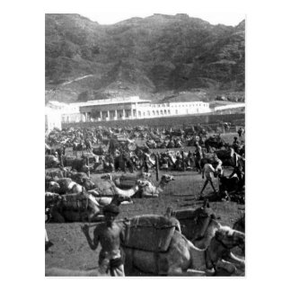 Camel Market, Aden, Yemen 1902 Postcard