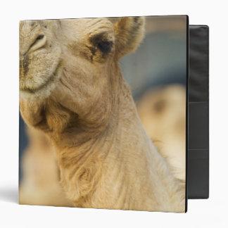 Camel Market near Cairo, Egypt 3 Ring Binders