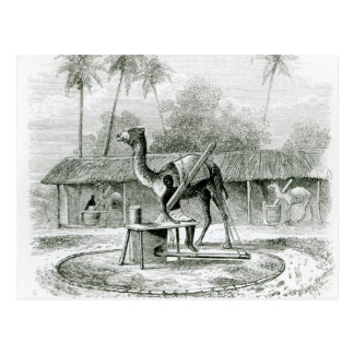 Camel Mill, from 'Travels in Africa' Postcard