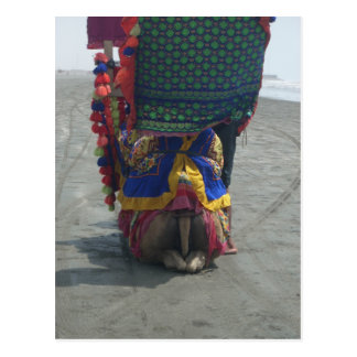 Camel on the toes.png postcard
