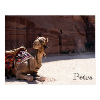 camel petra postcard