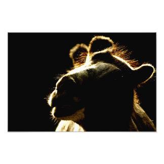Camel Photo Print