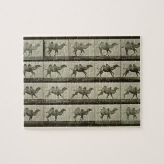 Camel, plate from 'Animal Locomotion', 1887 (b/w p Jigsaw Puzzle