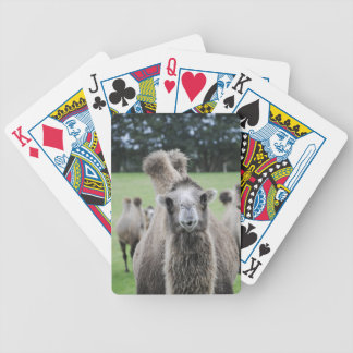 Camel Playing Cards