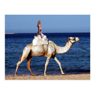 Camel Rider by the Sea Postcard