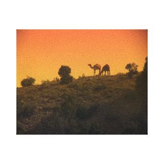 Camel Sunset Canvas Print