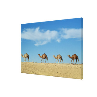 Camel train canvas print