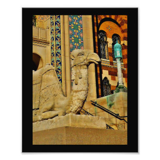 Camel View Photo Print