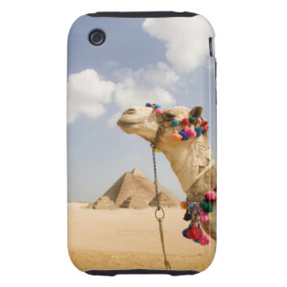 Camel with Pyramids Giza, Egypt Tough iPhone 3 Cover