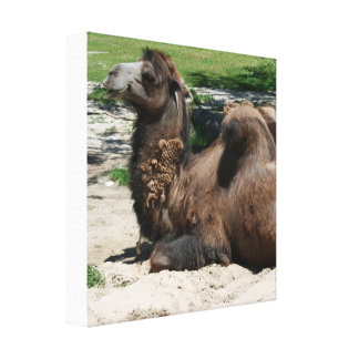 Camel Wrapped Canvas