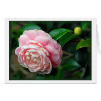 """""""Camellia"""" Card"""