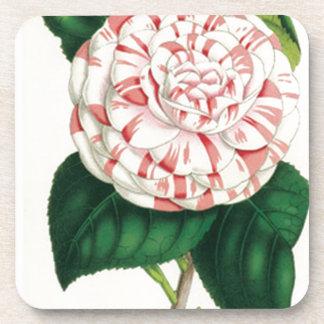 Camellia Coaster