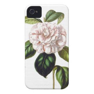 Camellia Flower iPhone 4 case